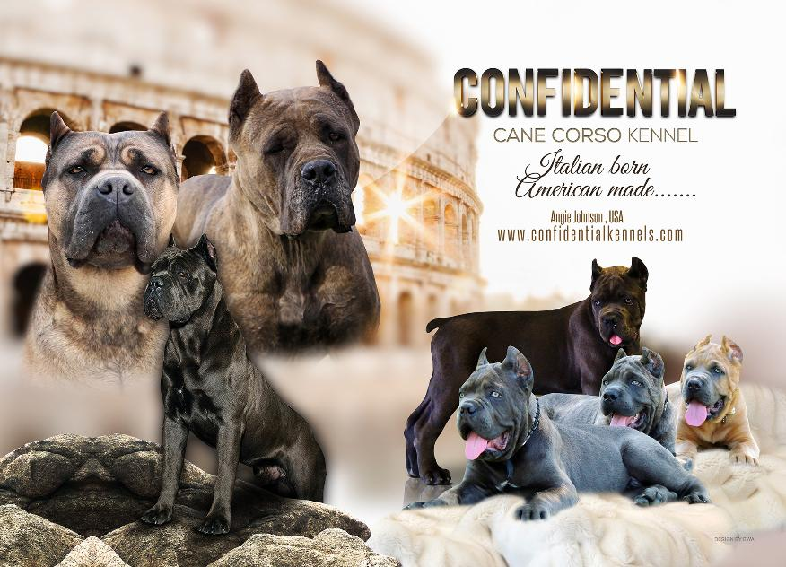 Confidential Kennels